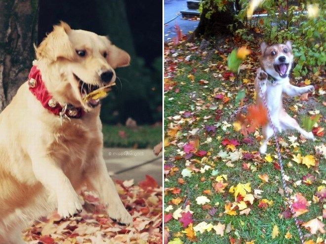 dogs loving fall - Dog - e missi gold
