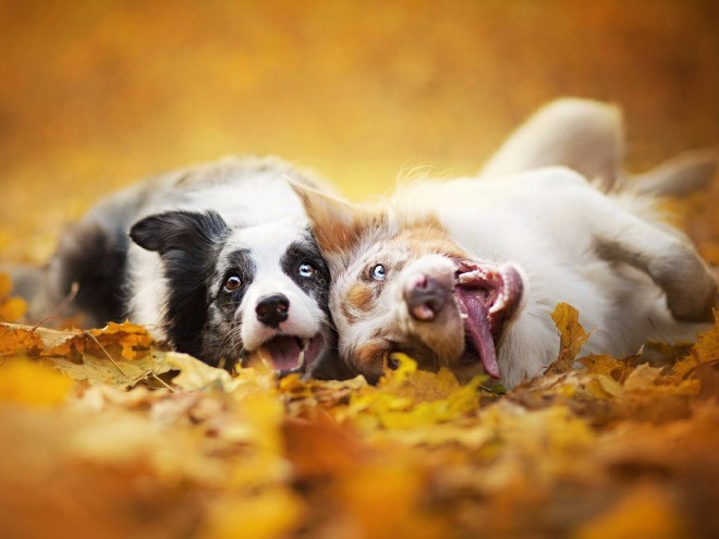 dogs loving fall - Mammal
