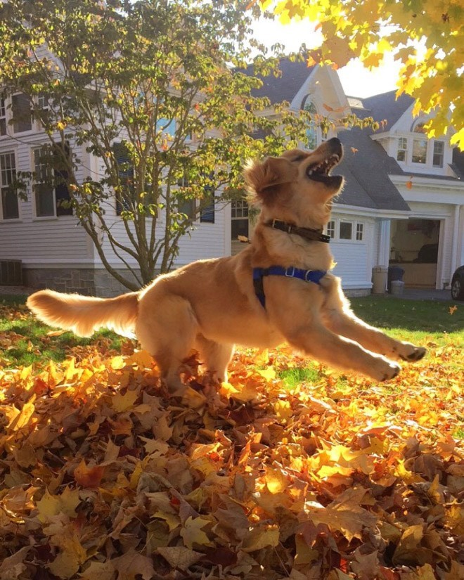 dogs loving fall - Dog breed