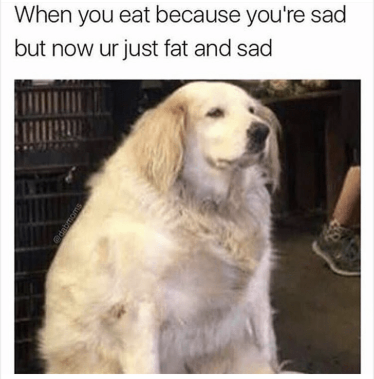meme about being fat and sad with picture of overweight dog