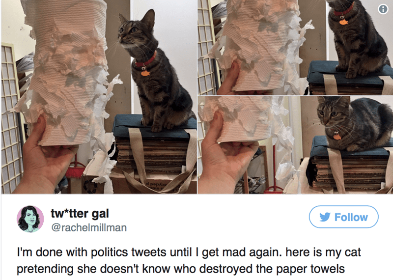 Cat - l popoo tw*tter gal Follow @rachelmillman I'm done with politics tweets until I get mad again. here is my cat pretending she doesn't know who destroyed the paper towels