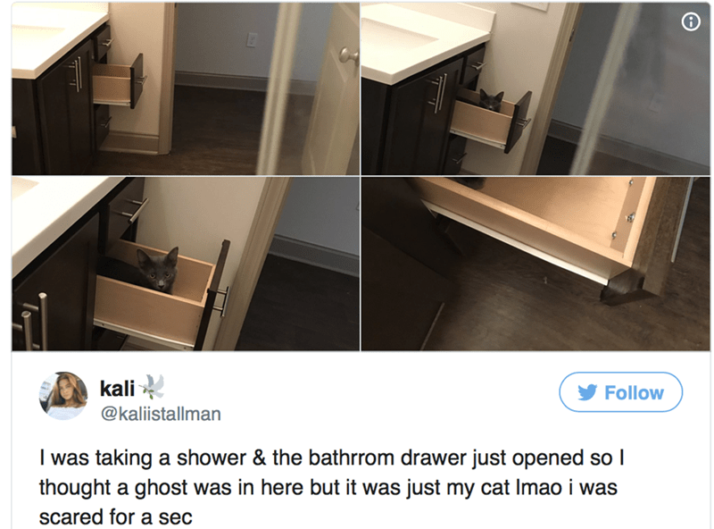 Product - kali Follow @kaliistallman I was taking a shower & the bathrrom drawer just opened so I thought a ghost was in here but it was just my cat Imao i was scared for a sec