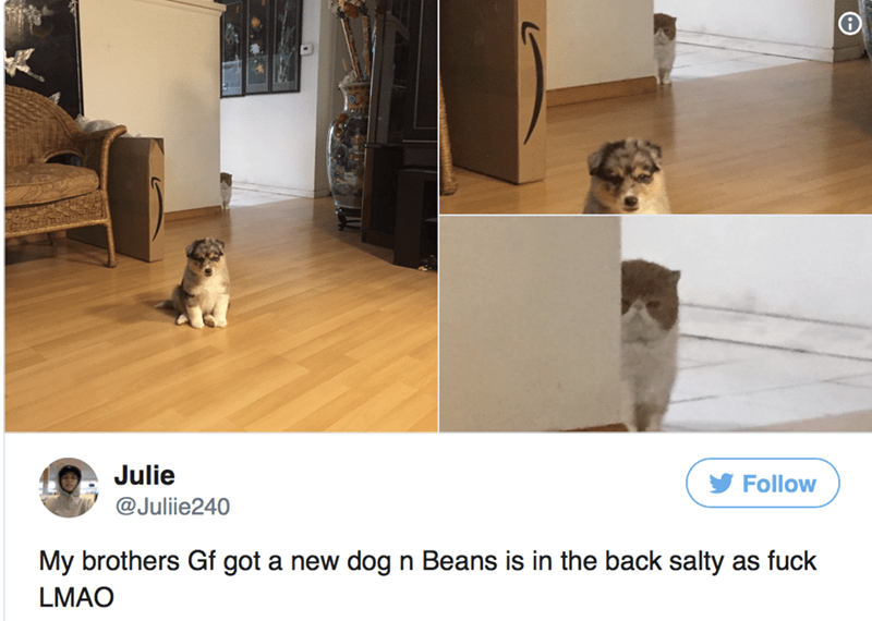 Floor - Julie Follow @Julie240 My brothers Gf got a new dog n Beans is in the back salty as fuck LMAO