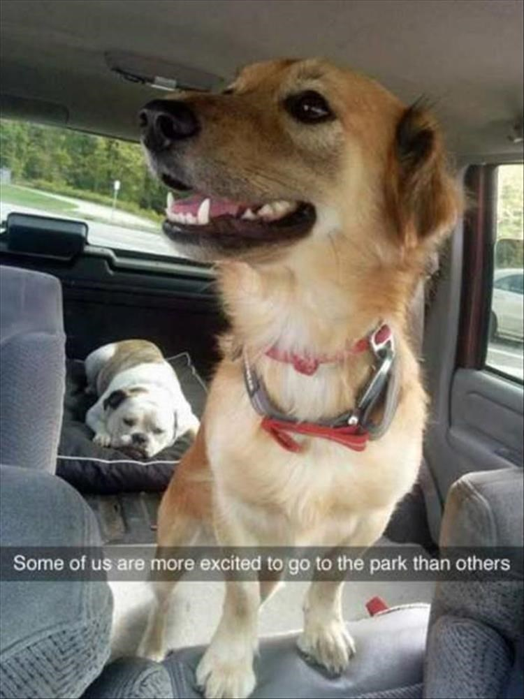 dogs Memes funny - 9080532224
