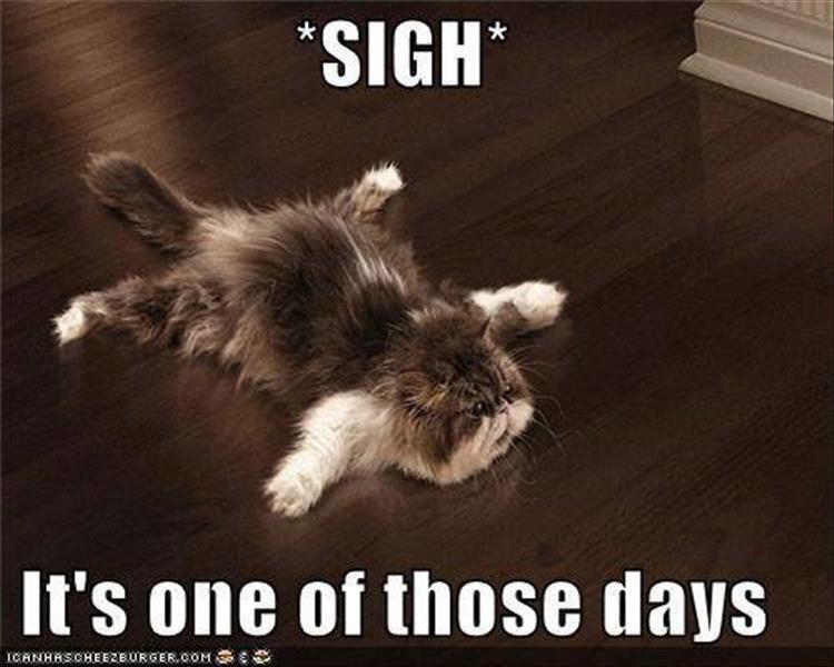 Memes Cats funny - 9080532480