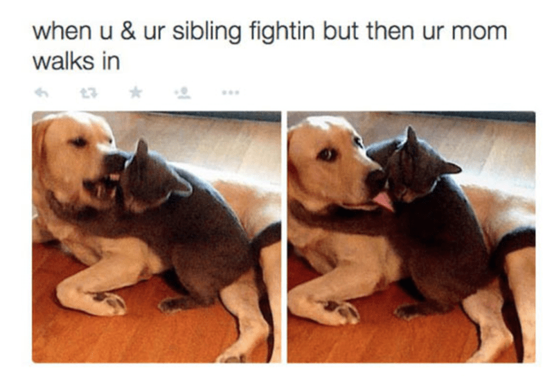 Dog and cat fighting in meme about when you and siblings at it and then mom walk in