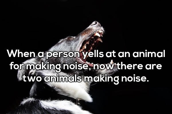 Adaptation - When a person yells at an animal for making noise now there are Itwo animals making noise.