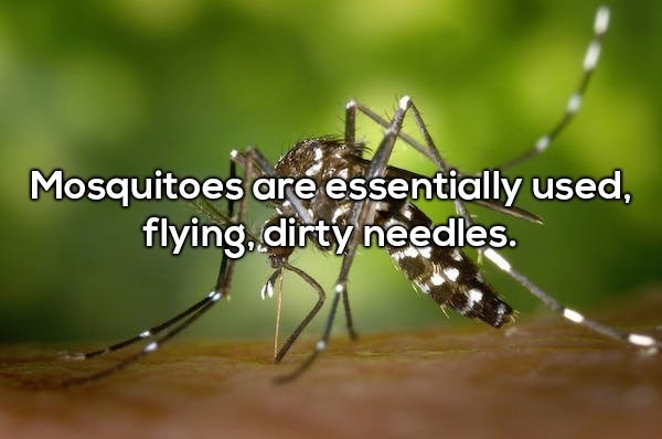 Insect - Mosquitoes are essentially used, flying, dirty needles.