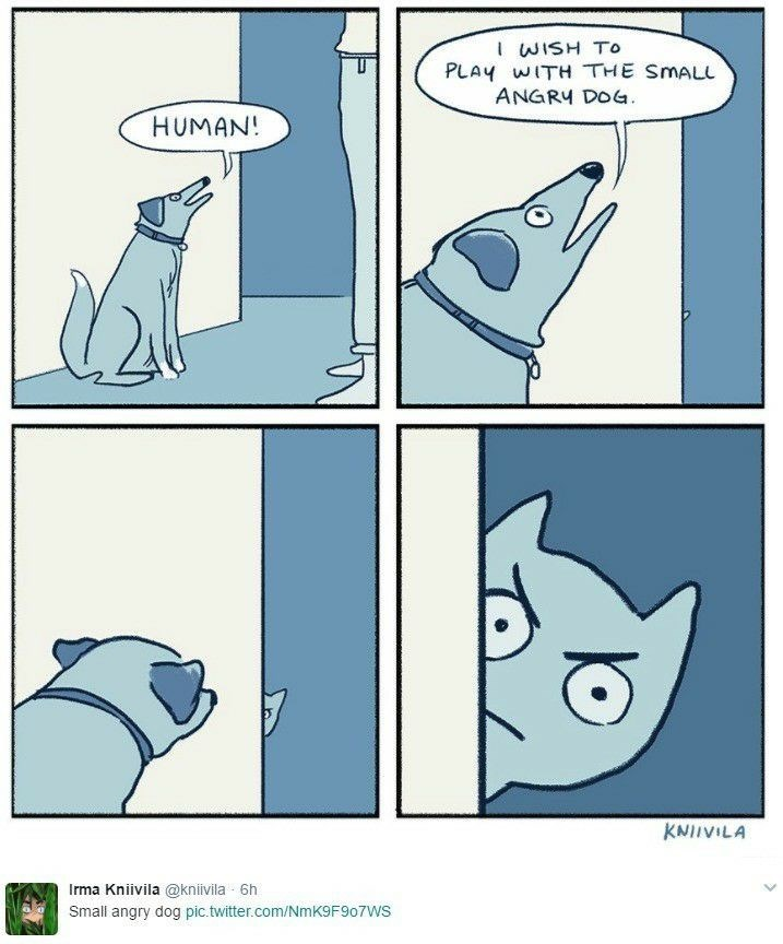Funny meme in which the dog basically wants to play with the cat, which it describes as small angry dog