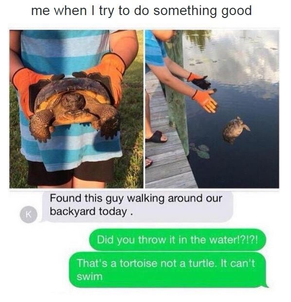 Meme of someone who found a turtle and threw him in the water.