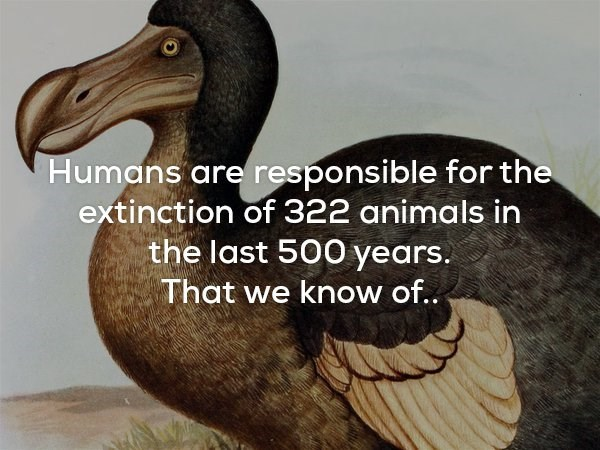 Bird - Humans are responsible for the extinction of 322 animals in the last 500 years. That we know of..