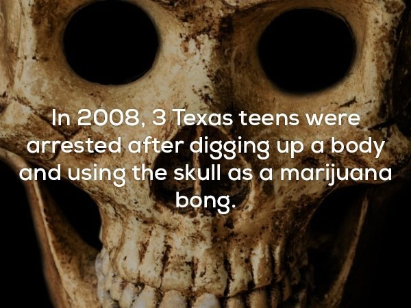 Tree - In 2008, 3 Texas teens were arrested after digging up a body and using the skull as a marijuana. bong.