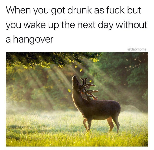Funny meme about when you wake up without a hangover.