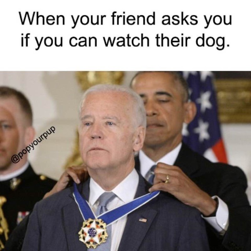 Funny meme about when your friend asks you to watch their dog.