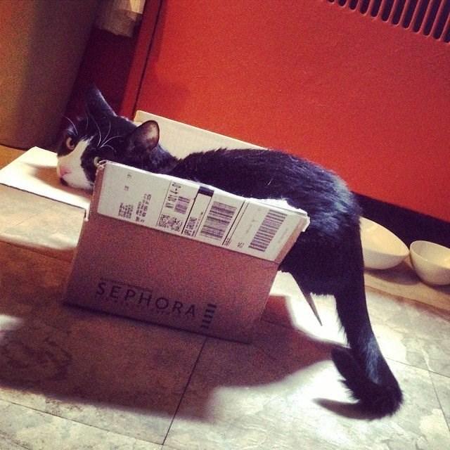 cat in box - Cat - SEPHORA M