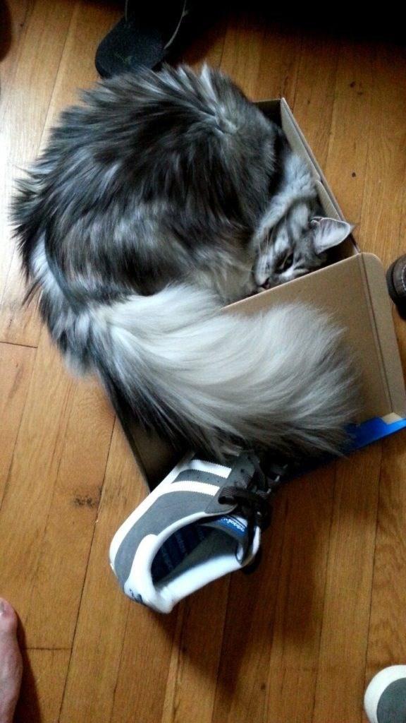 cat in box - Hair