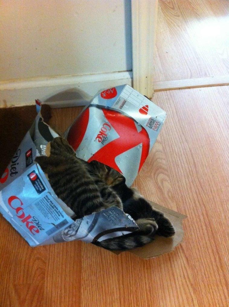 cat in box - Footwear - WIN NNER Coke Die Bed Se inside Diet Diet Coke