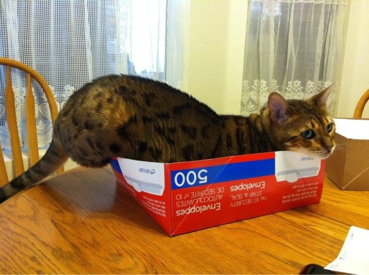 cat in box - Cat - Enveloppes STRP&SEAL AUTOCOLLANTES Envelopes DE SECARITE n' 10 500