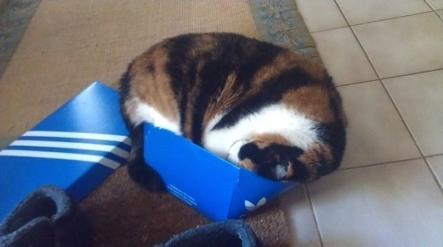 cat in box - Canidae