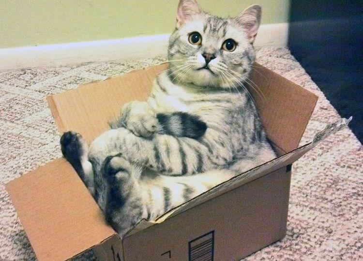 cat in box - Cat - 1
