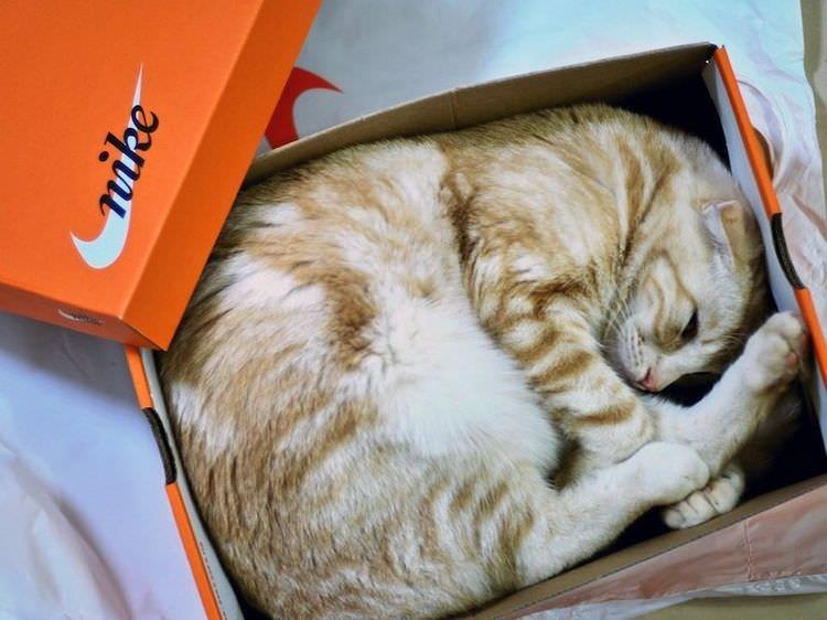 cat in box - Cat - nike