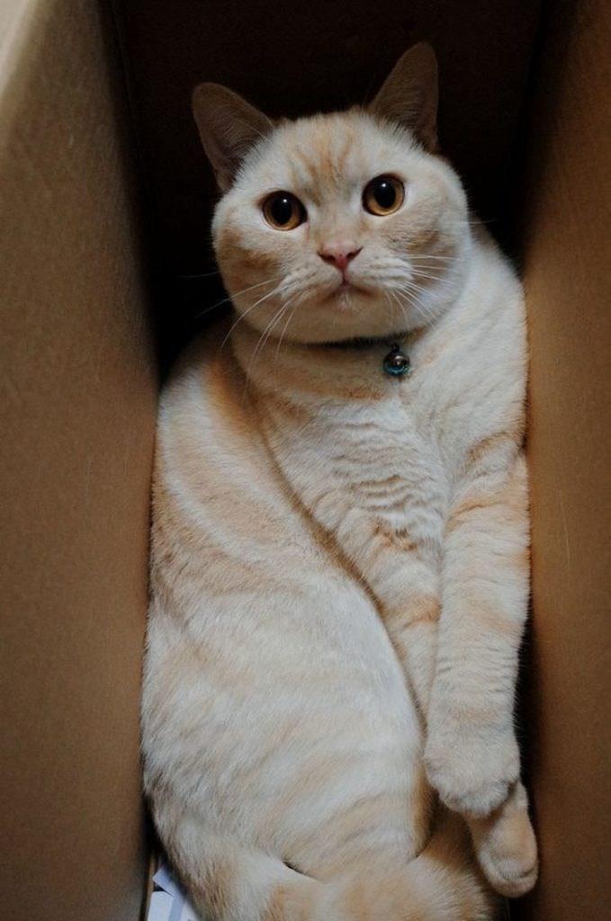 cat in box - Cat
