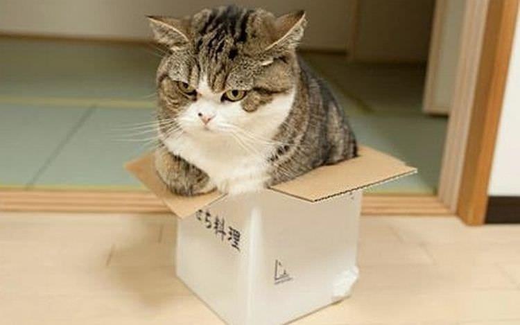 cat in box - Cat - ち料理
