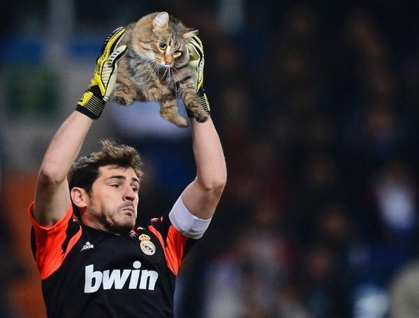 goalie catches a cat