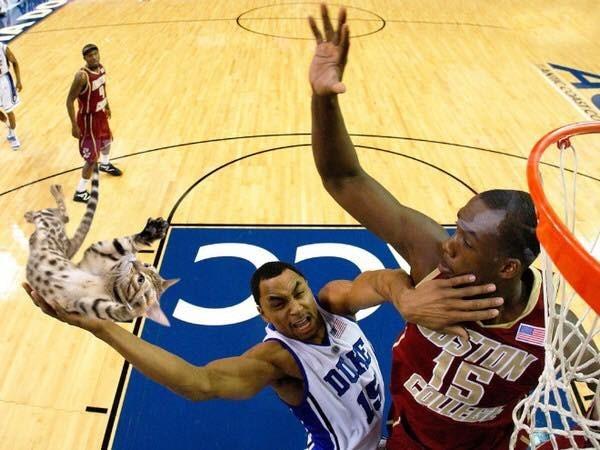 NBA player slam dunking a kitteh