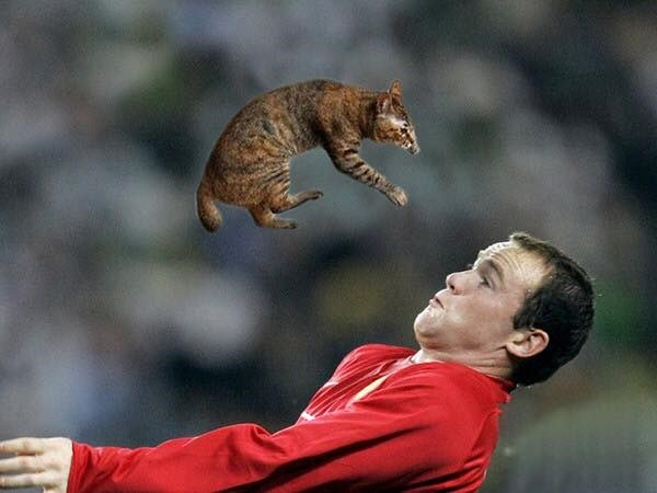 cat flying in the air over soccer player