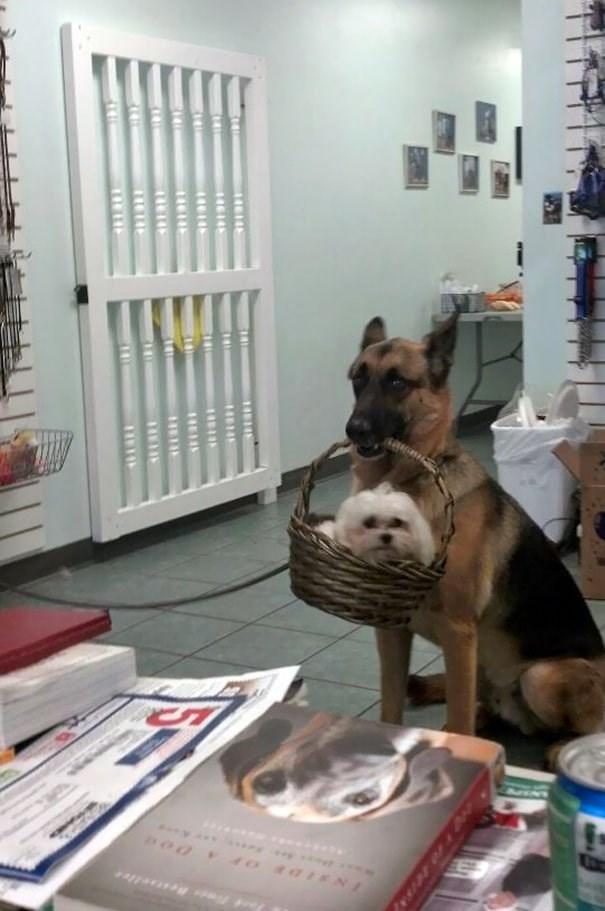 Dog - Bestae llee 5
