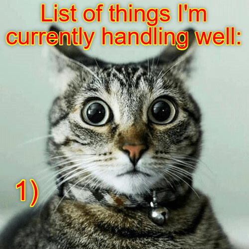 seriously lolcats lol cat memes funny cats funny cat