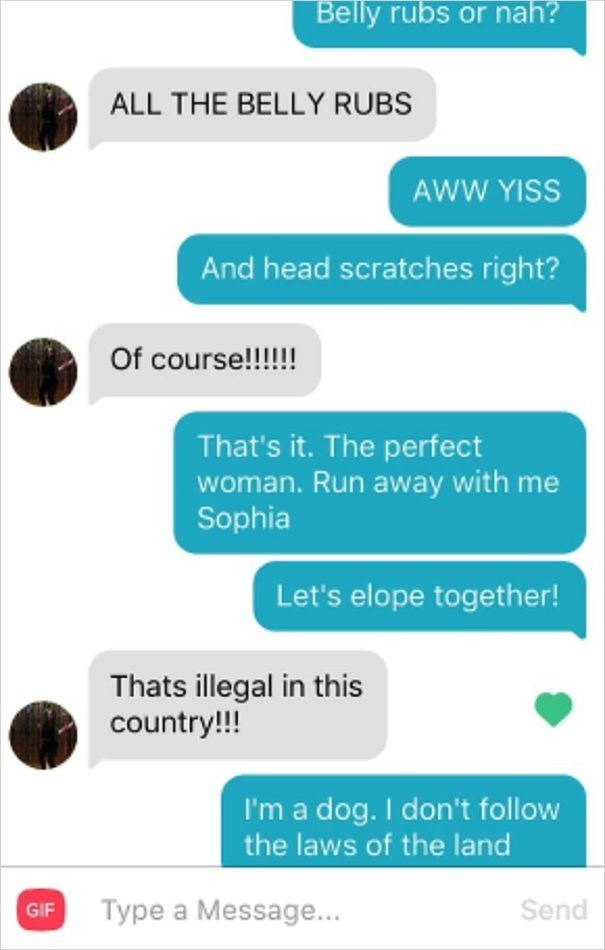 dog tinder - Text - Belly rubs or nah? ALL THE BELLY RUBS AWW YISS And head scratches right? Of course!!!!! That's it. The perfect woman. Run away with me Sophia Let's elope together! Thats illegal in this country!!! I'm a dog. I don't follow the laws of the land Type a Message... Send GIF