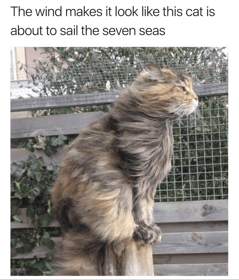 sunday memes - Meme of a Majestic AF cat with fur in the wind