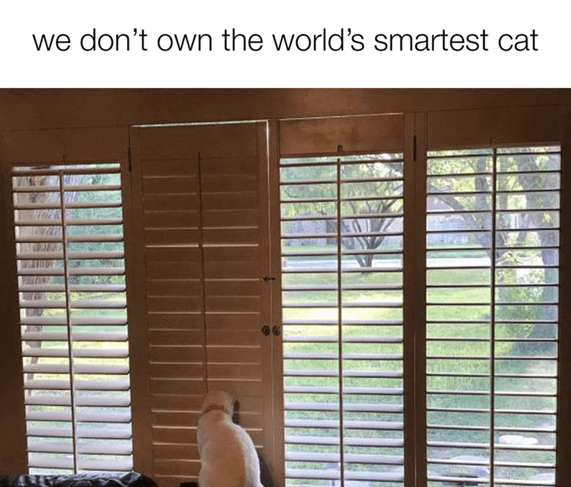 sunday meme Cat staring at the closed blinds