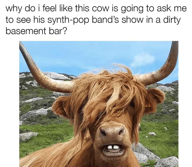Sunday meme - Horn - why do i feel like this cow is going to ask me to see his synth-pop band's show in a dirty basement bar?