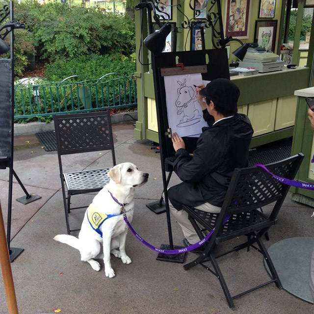 Golden Retriever getting his caricature done