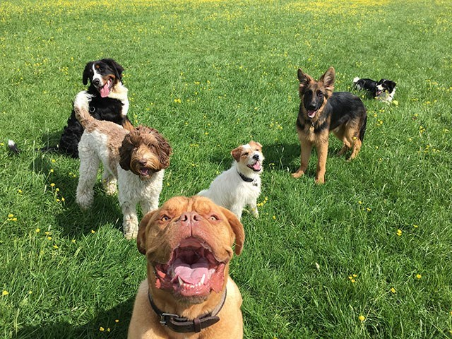 happy dogs at the park