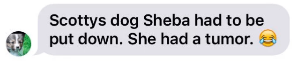 Text - Scottys dog Sheba had to be put down. She had a tumor.