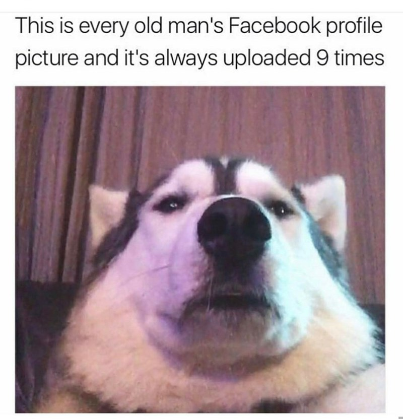 monday meme about old people's Facebook photos with selfie of dog taken from a low angle