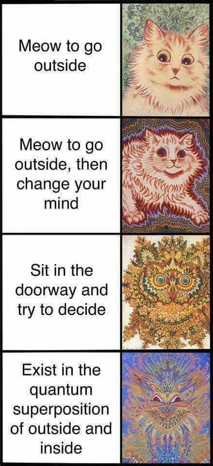 Funny expanding brain meme about cats that want to go outside.