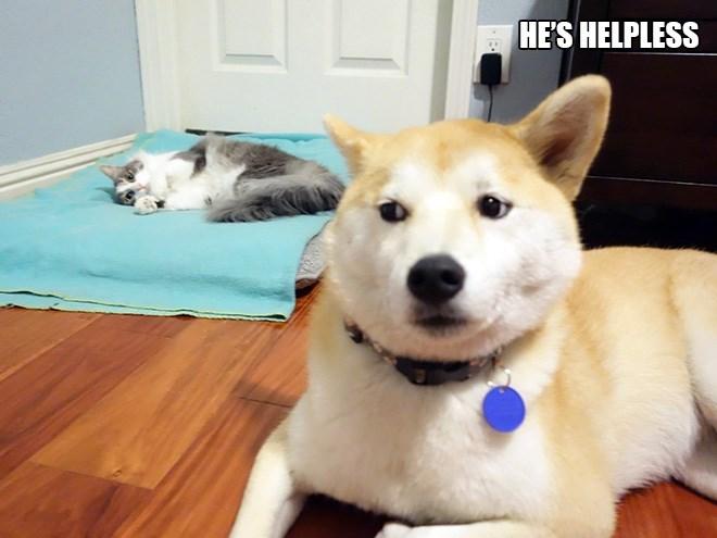 Dog - HE'S HELPLESS