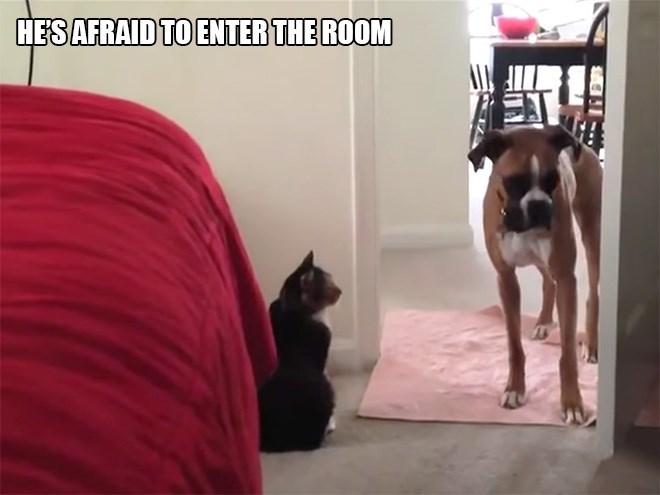 Dog - HESAFRAID TO ENTER THE ROOM
