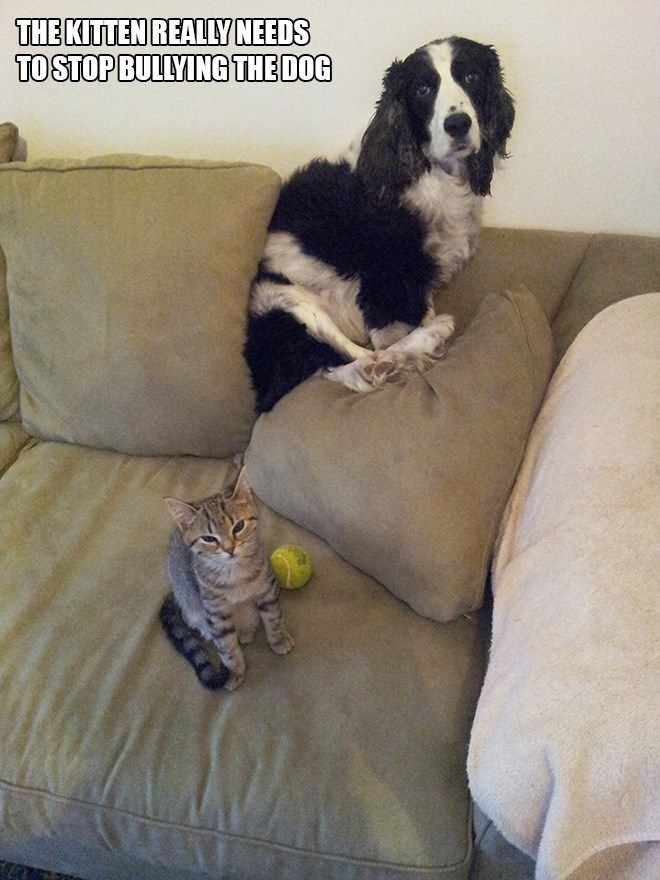 Dog - THE KITTEN REALLY NEEDS TOSTOP BULLYING THE DOG