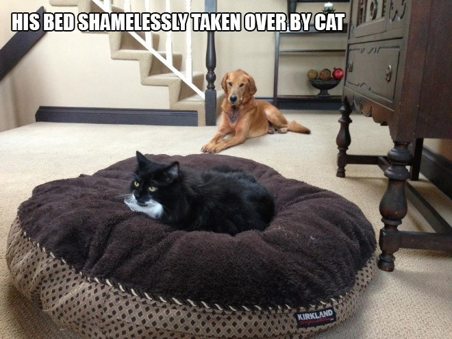 Dog bed - HIS BED SHAMELESSLY TAKEN OVERBYCAT KIRKLAND
