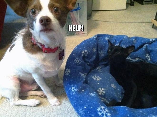 Dog - HELP!