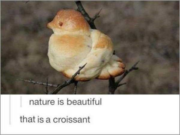 bird made out of dough on twigs Bird - nature is beautiful that is a croissant