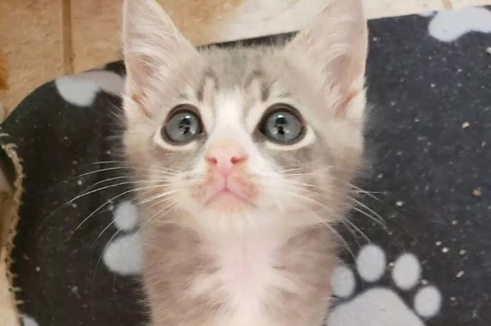 kitten cute cuddly animals
