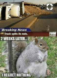 Squirrel - Breaking News LIVE Truck spills its nuts. ETCLIBVE 2WEEKS LATER.. OREGRET NOTHING
