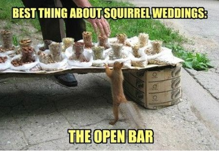 Grass - BEST THING ABOUTSQUIRRELWEDDINGS: THE OPEN BAR o oo